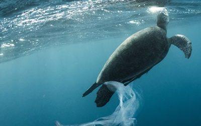 La iniciativa mundial de turismo y plásticos lucharán contra uno de los mayores contaminantes